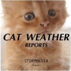 cat-weather-report